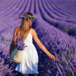 Достопримечательности Франции: лавандовые поля Прованса